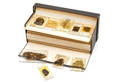 Lot 14-A Large Collection of Coal Fossil Microscope Slides