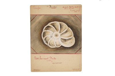 Lot 35-A Collection of 12 Hand Painted Victorian Microscopical Studies