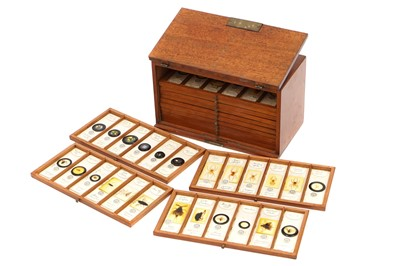 Lot 8-A Very Fine Collection of 84 Insect Microscope Slides by Watson