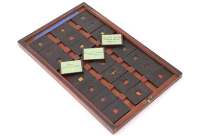 Lot 24-A Cased Set of Hyrtl Microscope Slides