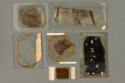 Lot 30-A Collection of Large Lomax Microscope Slides from the Lomax Exhibition