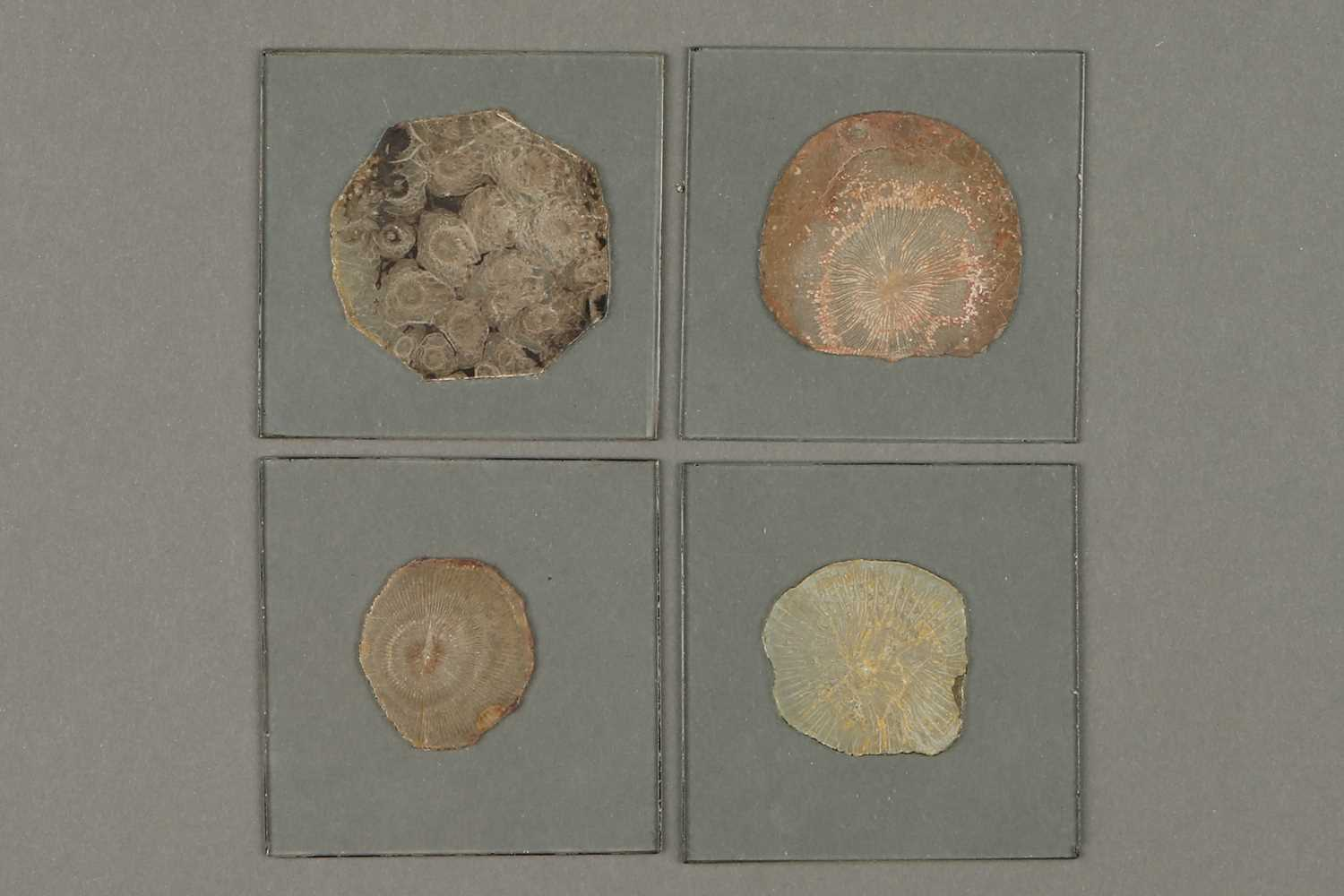 Lot 31-A Collection of Large and Early Mineral Microscope Slides