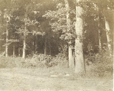 Lot 78 - CHARLES MARVILLE (1813-1879), Woodland Study